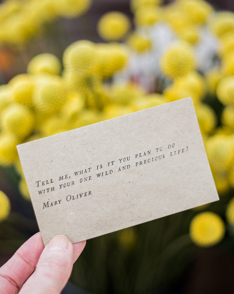 Tell me, what is it you plan to do with your one wild and perfect life? — Mary Oliver