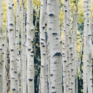 Need a boost? Make trees part of your mental health routine
